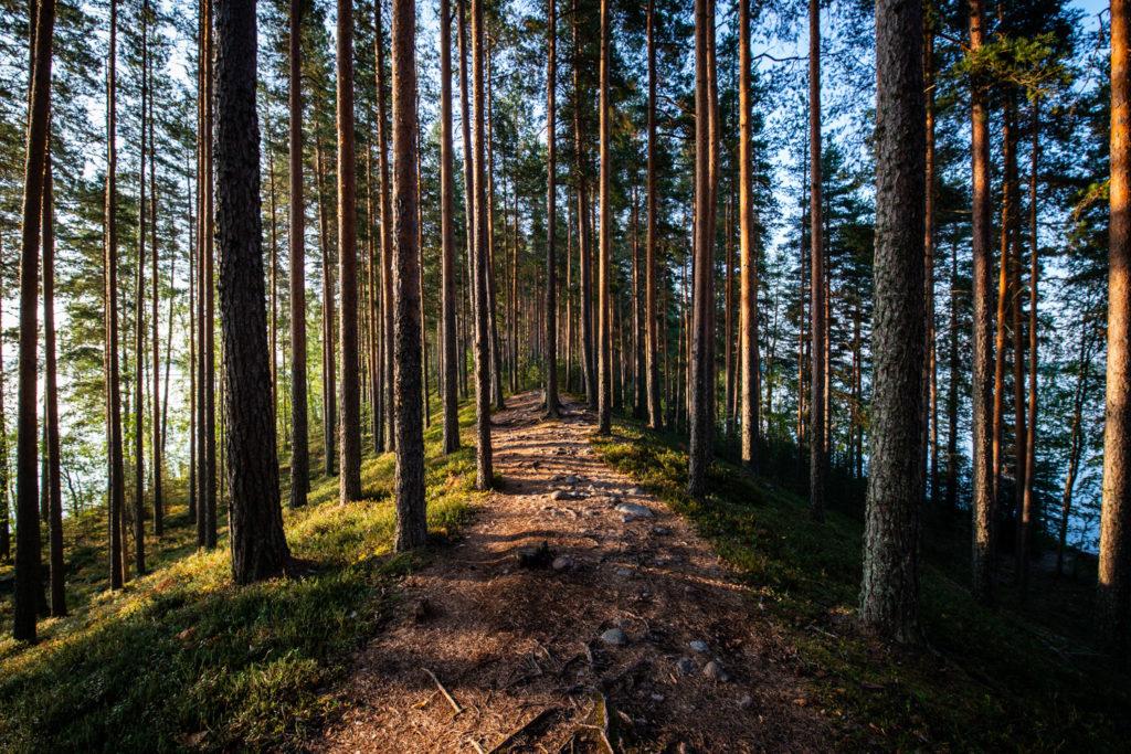 Finland Jyväskilä sunrise nature landscape photography