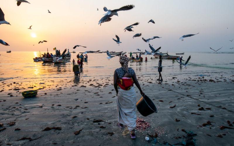 Women working on the fish market of Tanji, the Gambia