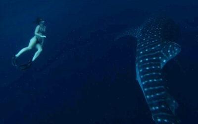 A Whale Shark Adventure